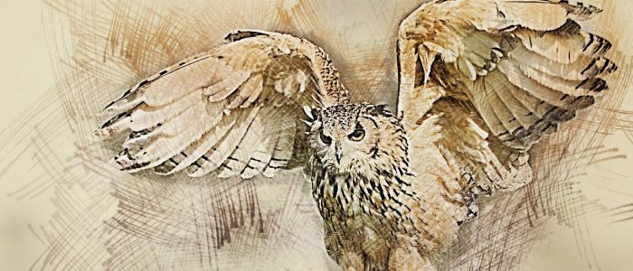 owl, wildlife, bird